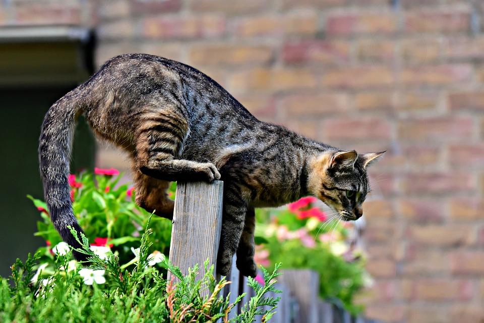 kočka na plotě