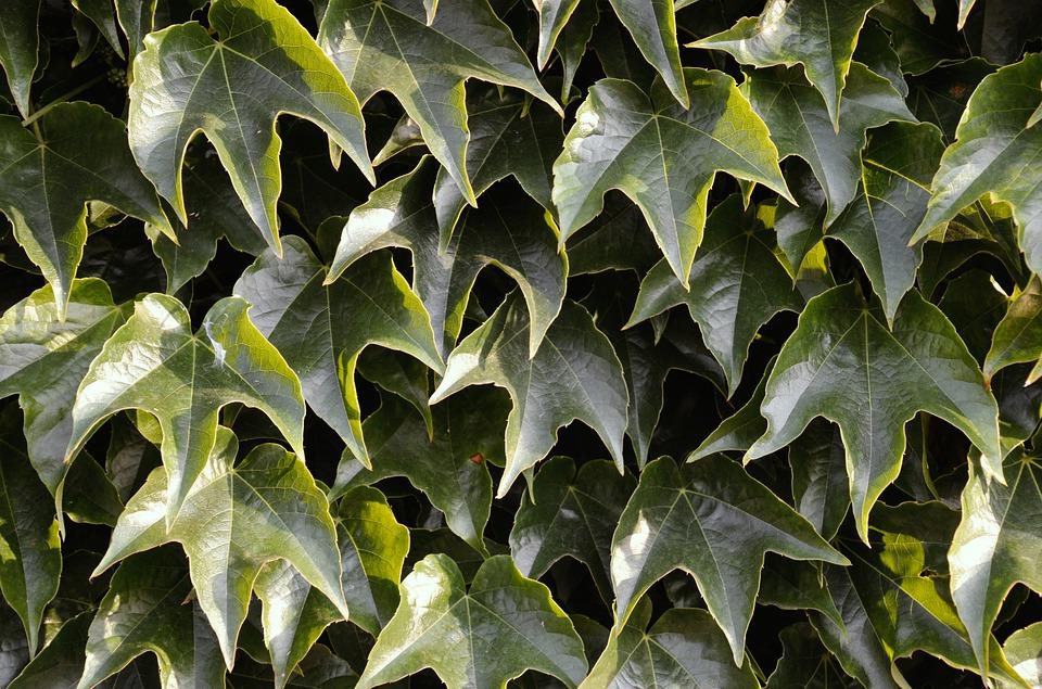 pnoucí rostliny